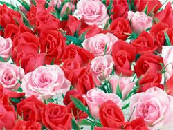 Какой цветок подарить девушке чтобы